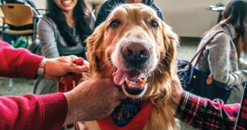 DOG SHOW : Students for One Health brought therapy dogs to the Medical School for a study break in December.