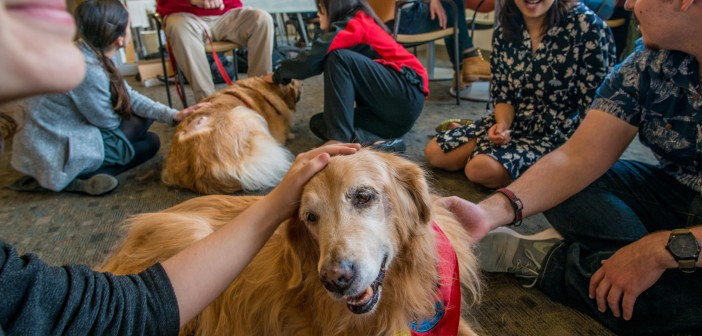 From right, Peter Herrera '16 and Alice Tin, MPH MD'16, both members of Students for One Health, with Liberty, a golden retriever. Photo by David DelPoio