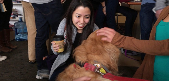 Students for One Health and the Health and Wellness Initiative cosponsored a visit at Alpert Medical School by four therapy dogs to help students alleviate pre-exam stress in December. Photo by David DelPoio