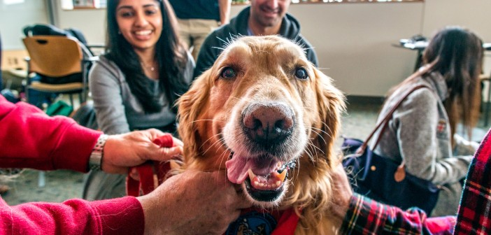 Sanchita Singal '13 MD'17, left, and Anshul Parulkar '10 MD'18 get to know Independence, a golden retriever. Photo by David DelPoio