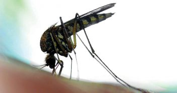 At press time, mosquitoes carrying Zika hadn't yet been found in the US.