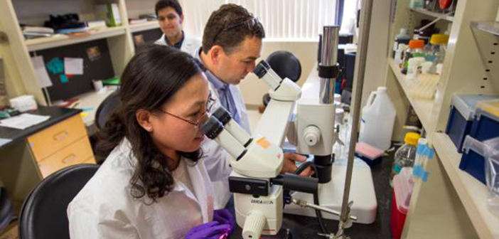 Qing Ouyang, left, and Eric Morrow led a study tracing how a mutation causes a rare brain disease. Photo by Nicholas Dentamaro