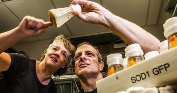 EYES ON THE FLIES: Biology professors Kristi Wharton and Robert Reenan study ALS using fruit flies engineered to genetically model the human disease. Photo by Mike Cohea
